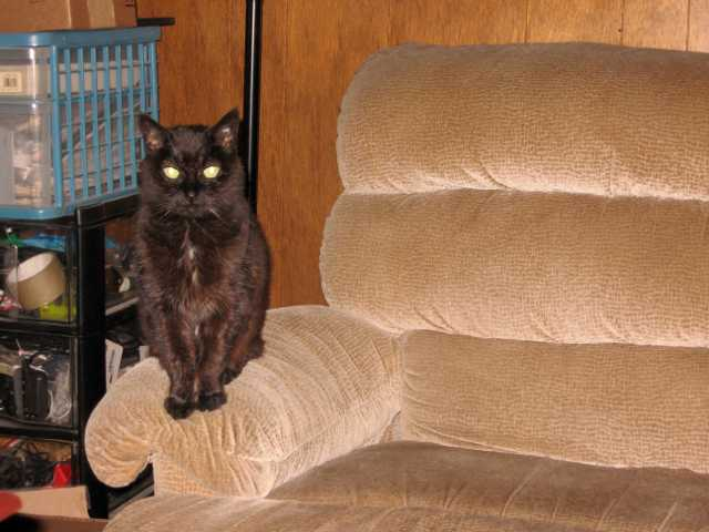 Mildred sitting on armrest of couch